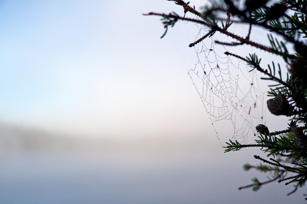 Spider's web in misty morning conditions